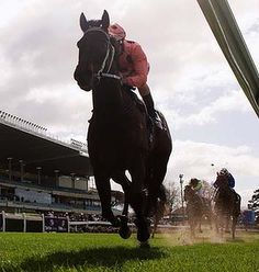 Black Caviar is heading into a well earned retirement. She won 15 Group One races, including the Diamond Jubilee Stakes at Royal Ascot last year. The mare will now begin a breeding career, where her foals are expected to bring millions. Spanish Riding School, Horse Racing Tips, Sport Of Kings, Thoroughbred Horse, Racing News, Racehorse, Royal Ascot, Caviar, Beautiful Creatures