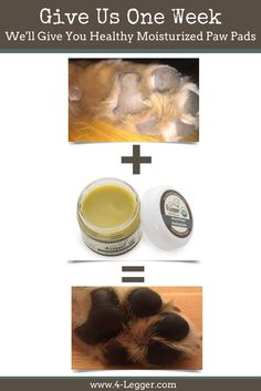 Give us a week to heal your dog's dry skin! https://www.4-legger.com/collections/all/products/healing-balm  Our USDA Certified Organic Balm with Hemp, Calendula, St. John's Wort and Beeswax is packed with antioxidants and healing power!