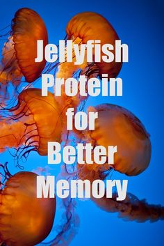 #HealthyAging How a Jellyfish Protein Can Improve Your Memory