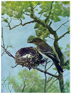 The following table lists the varieties of trees and shrubs that attract particular birds. The Old Farmer's Almanac presents a table of food- and shelter-providing trees and shrubs for birds.
