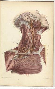 Atlas d anatomie descriptive du corps humain. Partie 2   par MM. les c9f1624e868c