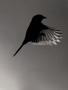 Bird  -  Monochrome  -  Photography