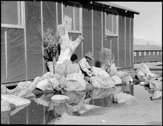Manzanar Relocation Center, Manzanar, California. William Katsuki, former professional landscape gardener for large estates in Southern California, demonstrates his skill and ingenuity in creating from materials close at hand, a desert garden alongside his home in the barracks at this War Relocation Authority center.