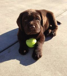 But they ALSO know the importance of playtime.   27 Reasons Labradors Are The Best Creatures In The Galaxy