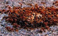 Treating Fire Ants - Diaz Lawn, LLC.