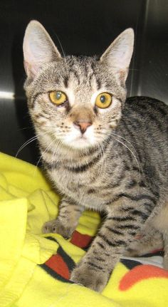 Little Gia and Mia look so much alike we have a hard time telling them apart.  They are a cautious pair of sisters and need to explore and get to know things.  They long for a new home, the shelter is a scary place for them.  I bet your home is not...