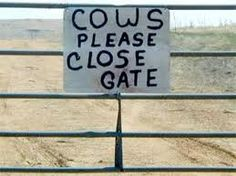 If there's one thing I cannot understand is why cows will NOT close the gate after they walk through. What's up with that?
