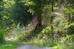 Woodland IMGP4892 by Biberius on DeviantArt