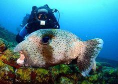 That's probably the closest you should get to that. #aquanautsgrenada #scubadiving #rebreather #ccr #wreckdiving #wreck #puregrenada #discovergrenada #grenada #reef #reefdiving #snorkeling #divegrenada  #scubadiver #padi #island360 #paditv #padidiver #scubadivingmag #travel #divetravel #sportdiver #scubapro #sgu #travelandleisure #scubadivers #travelingtheworldd #bg_underwater
