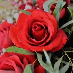 Red rose (rikisart 2017)