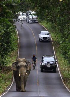 เขาใหญ่ Thailand Thailand Destinations, Elephant, Kawaii, Animals, Animales, Kawaii Cute, Animaux, Animal, Animais