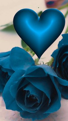 Blue Roses Wallpaper, Bling Wallpaper, Flower Phone Wallpaper, Heart Wallpaper, Love Rose Flower, Pretty Flowers, Beautiful Flowers Pictures, Beautiful Roses, Flower Images