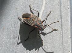 Organic Pest Control – Dan330