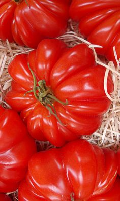 Simply Red, Tomato Garden, Fresh Fruits And Vegetables, Farmers Market, Garden Plants, Delish, Berries, Seeds, Gardens