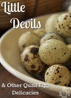 """Discover how to make """"Little Devil"""" deviled quail eggs as well as other recipes made just for these tiny eggs. The rich flavors will have you begging for more. Quail Recipes, Egg Recipes, Other Recipes, Healthy Recipes, Raising Quail, Raising Chickens, Preserving Eggs, Pickled Quail Eggs"""