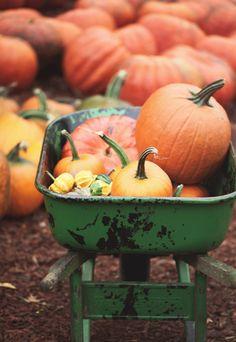 green wheelbarrow filled with pumpkins