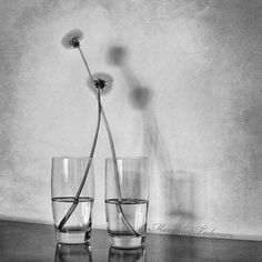 Abstract photography, black and white naturmort image, two glasses, two dandelions, love story - fine art print - different sizes