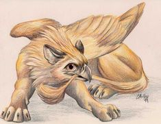 Young Gryphon Leo (not my art) Cute Fantasy Creatures, Magical Creatures, Fantasy Kunst, Fantasy Art, Vampires, Griffin Drawing, Griffin Mythical, Myths & Monsters, Lion