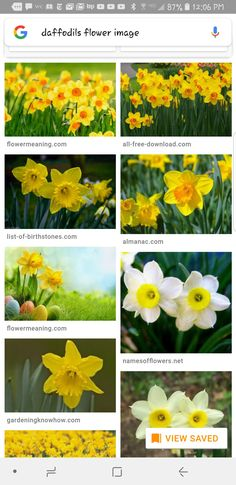 30 vibrant types of yellow flowers for your yard a to z yards more information mightylinksfo