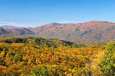 Wondering where you should go to see the fall colors in the Smoky Mountains? Hearthside Cabin Rentals shares the top places to go. Fall Vacations, Mountain Vacations, Vacation Trips, Vacation Ideas, Smoky Mountains Tennessee, Great Smoky Mountains, Gatlinburg Cabin Rentals, Ober Gatlinburg, Smoky Mountain National Park