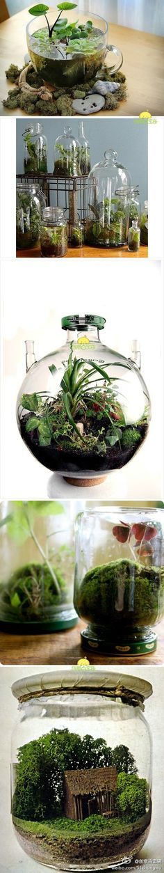 I <3 terrariums