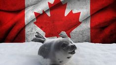 Petition · Justin Trudeau: STOP THE CANADA COMMERCIAL SEAL HUNT: Don't Seal Their Fate. · Change.org