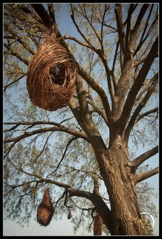 Patrick Dougherty - Hanging Pods could be made from found materials