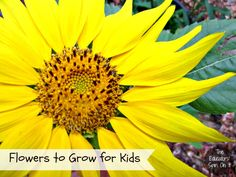 Our family really enjoys vegetable gardening. We started adding the vegetable gardens and the fruit trees and bushes. Next came the flowers. The rule in our house is that if you ask first, then you