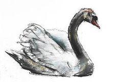 Adlington, Mark : Swan