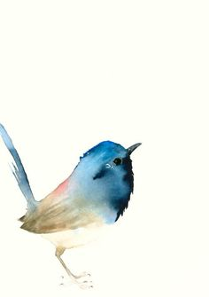 Fine Art Bird Print from Original Watercolor - Dark Blue Tiny Bird by Catherina Türk