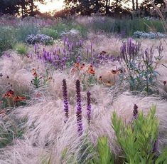 Wispy foggy mystical planting with perennials and grasses. W-Wispy foggy mystical planting with perennials and grasses. Wispy foggy mystical planting with perennials and grasses. Prairie Planting, Prairie Garden, Meadow Garden, Dream Garden, Back Gardens, Outdoor Gardens, Landscape Design, Garden Design, Ornamental Grasses