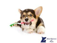 Cepillos dentales para los perros. LA MEJOR CLÍNICA VETERINARIA. Para que nuestra mascota tenga una higiene bucal correcta es necesario cepillarle los dientes. Los cepillos dentales para perros tienen diferentes formas para facilitar el limpiado. Hay que tener cuidado para evitar lastimarlos y que no nos muerdan. En Clínica Veterinaria del Bosque te asesoramos sobre la correcta salud bucal de tu mascota. www.veterinariadelbosque.com