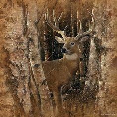 realistic paintings Whitetail Deer