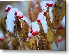 #Snow #Berry Metal Print By Bonfire #Photography