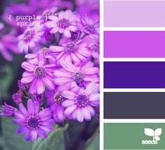 purple spring. Guest room