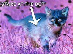 optical illusions GIF
