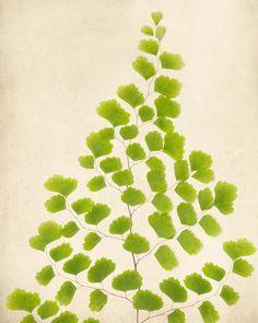 "Fine Art Botanical Print ""Southern Maidenhair Fern"""