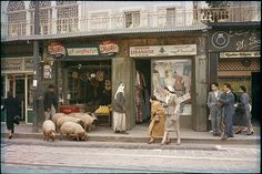 Credit: Thomas J Abercrombie/National Geographic Image Collection/Beetles + Huxley Pedestrians yield to sheep on the pavement in Beirut, 1958