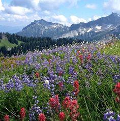 Alta Vista Trail in Mount Rainer National Park, Washington, USA