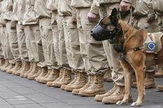 Navy Seabee Develops Military Dog Glue