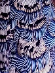 Feathers a great way of finding colour inspiration and varied pattern