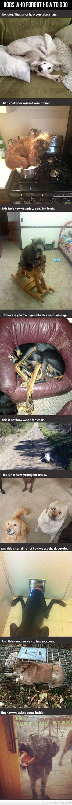 Oh dog, forgot how to dog? :') ...........click here to find out more http://googydog.com