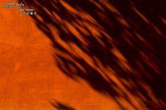 2014-12-21 - Light canvas 光的畫布@台南孔廟 光線向樹梢說:我要在紅牆上留下短暫的痕跡。