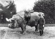 Pig rider, c. 1930s