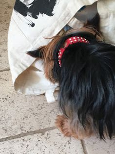 Elsie my Yorkshire Terrier tells of her turning cheese muncher and about my two furry new pals. Enjoy!