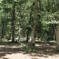 Home - ホウリーウッズ久留里キャンプ村 千葉県の素敵な林間キャンプ場