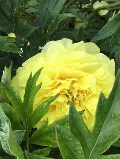 Hair Beauty, Rose, Flowers, Plants, Pink, Roses, Flora, Plant, Bloemen