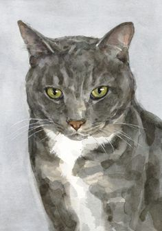 gray cat, watercolor, David Scheirer