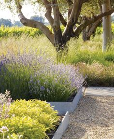 Understanding Landscaping with Ornamental Grasses You may think grass is not a great option if you've got a little courtyard, deck or balcony space. Ornamental grasses offer the Florida garde… Landscaping Austin, Modern Landscaping, Landscaping Plants, Garden Landscape Design, Landscape Architecture, Dry Garden, Garden Park, Mediterranean Garden, Natural Garden
