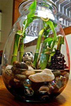 lucky bamboo terrarium - Google Search